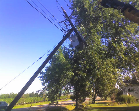 Powerline leaning against tree